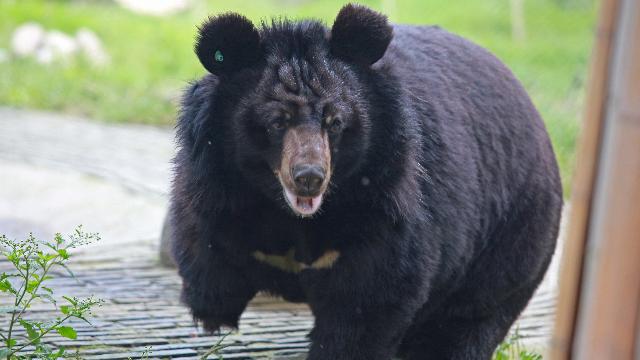 给熊孩子筹狗粮
