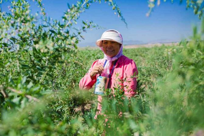 """【我们要做什么】中国绿化基金会诚邀蚂蚁金服公益爱心用户,以""""十元一棵树""""的捐赠标准,在2015年-2017年期间,共援助宁夏西海固地区贫困乡村的2100户贫困农户在的荒漠里,种上140万棵枸杞树,造林5600亩。这是看得见摸得着的环保行动。项目至2007年启动以来,经过10年的实践发展,已经拥有了一套非常成功有效的复制模式,获超2500万爱心人士捐赠支持,累计植树造林106478亩,树木首年平均成活率达80%,次年补种后成活率达到100%。"""